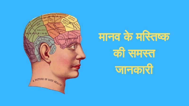 मनुष्य का मस्तिष्क