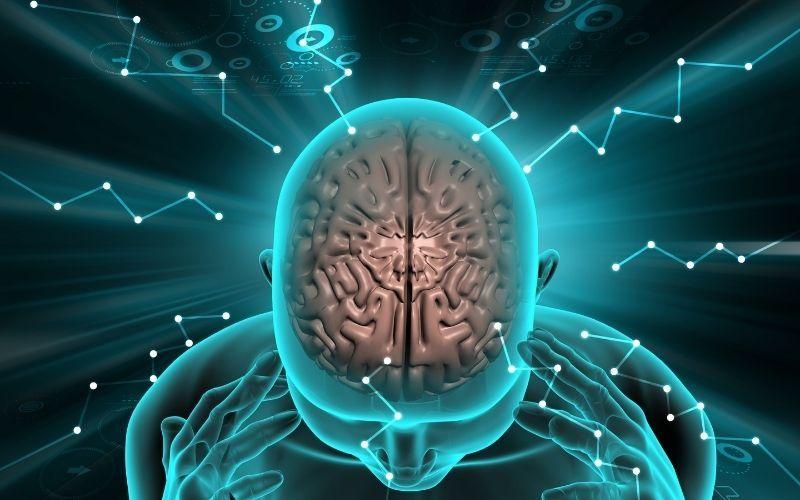 मानव मस्तिष्क