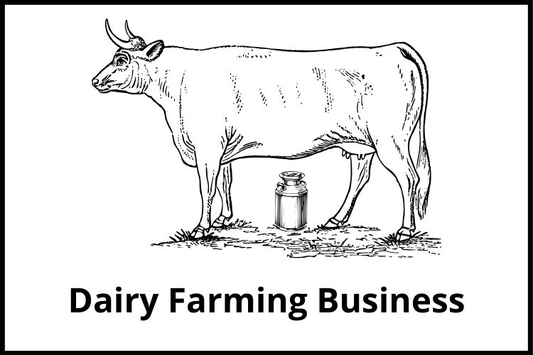 Dairy Farming Business
