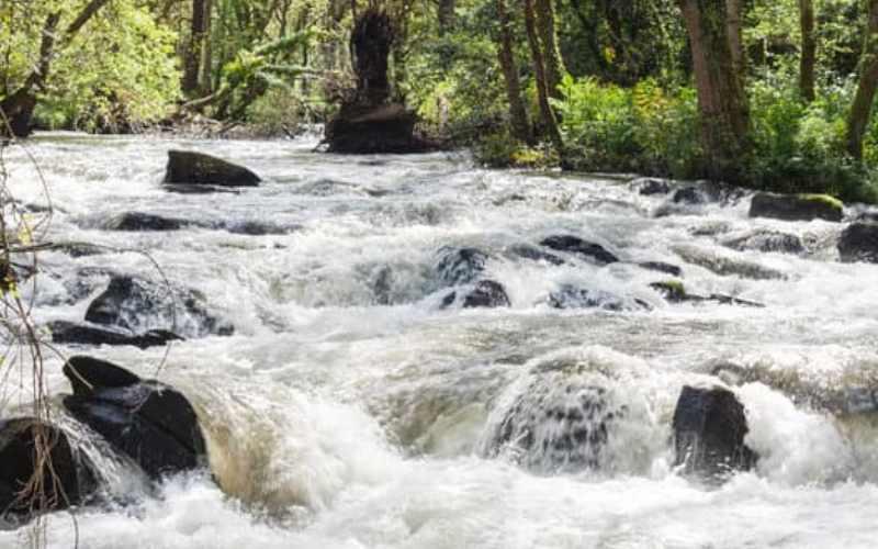 बनास नदी